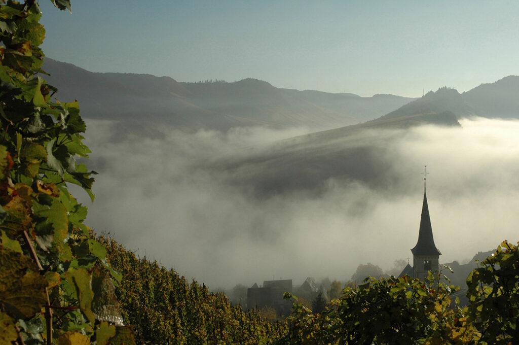 Morgennebel in Bremm an der Mosel