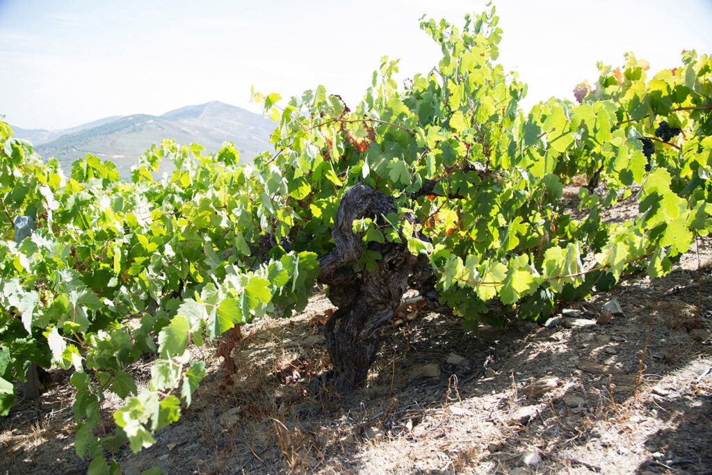 bodegasavancia-winery-008